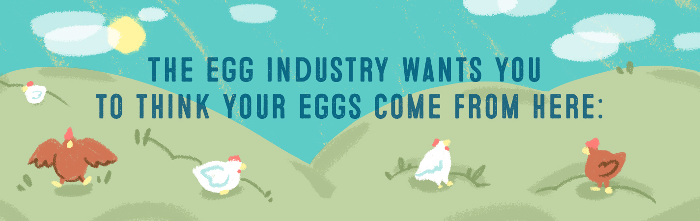 THE EGG INDUSTRY WANTS YOU TO THINK YOUR EGGS COME FROM HERE: