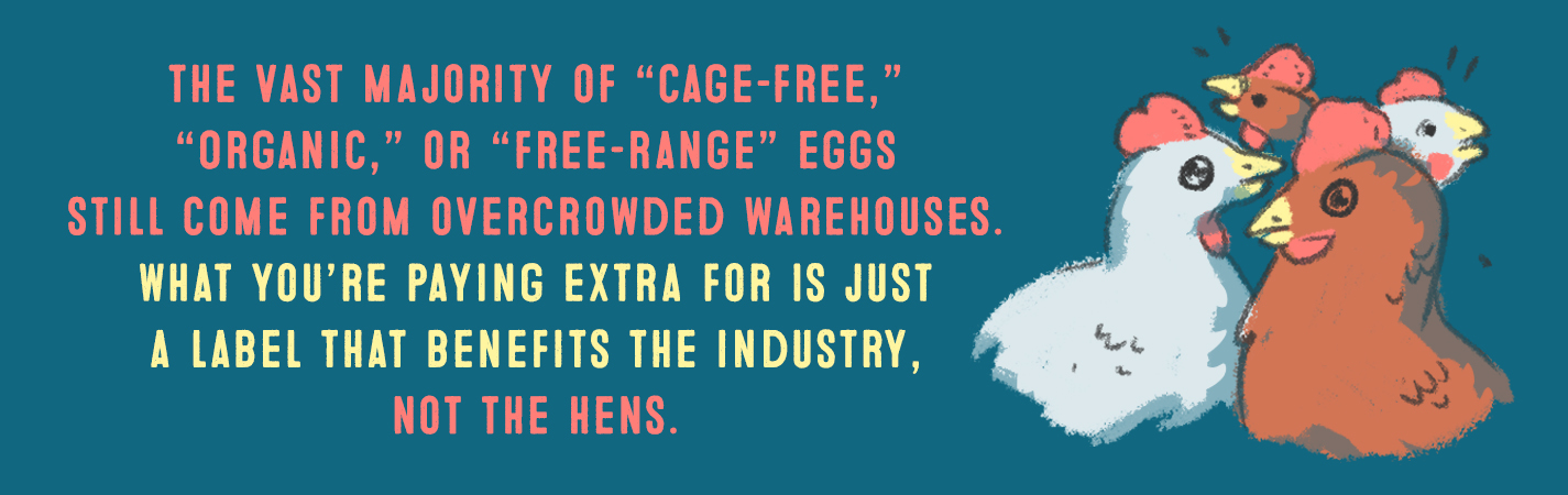 THE VAST MAJORITY OF CAGE-FREE, ORGANIC OR FREE-RANGE EGGS STILL COME FROM OVERCROWDED WAREHOUSES. WHAT YOU'RE PAYING EXTRA FOR IS JUST A LABEL THAT BENEFITS THE INDUSTRY, NOT THE HENS.