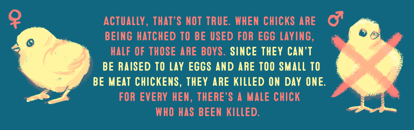 ACUTALLY, THAT'S NOT TRUE. WHEN CHICKS ARE BEING HATCHED TO BE USED FOR EGG LAYING, HALF OF THOSE ARE BOYS. SINCE THEY CAN'T BE RAISED TO LAY EGGS AND ARE TOO SMALL TO BE MEAT CHICKENS, THEY ARE KILLED ON DAY ONE. FOR EVERY HEN, THERE'S A MALE CHICK WHO HAS BEEN KILLED.